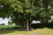 6-10 Naturdenkmal Ueckinghoven/Wegekreuz