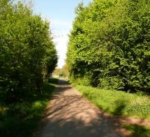 3-26: Riga-Wald